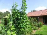 Raguth - Garten Heiden