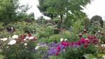 Bad Doberan - Garten Kohlschmidt