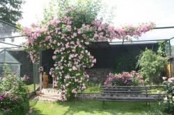 Boddin - Picceninis Gartenwelt