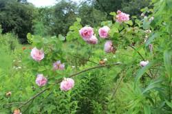 Dassow - Garten Stuppy