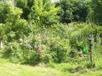 Groß-Wokern - Garten Schmid