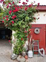 Ziethen - Garten Kummert