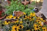 Kritzmow - Garten Miksch