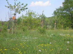Karlsburg OT Steinfurth - Garten Weiland/Schwahn
