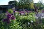 Drispeth - Garten Schöttke-Penke