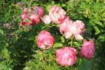 Polz- Garten Suhana-Castano