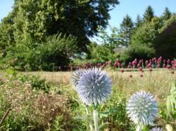 Bobitz OT Ziegelei Dalliendorf - Garten Dittrich + Leverenz