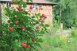 Qualitz - Garten  Lilienthal