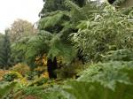 Parchim - Garten Harm