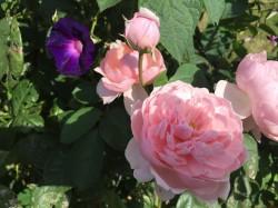 Peenehagen - Garten John