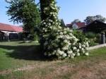 Sanitz OT Vietow - Garten Jungblut