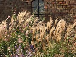 Tarnow - Garten Müller