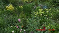 Jatznick - Garten Raatz/Mathesius