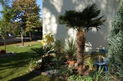 Lubmin - Garten Tornow