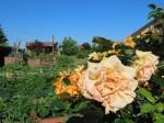 Rubkow - Bauerngarten Wendt